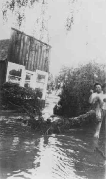 1927_gandyra_harness